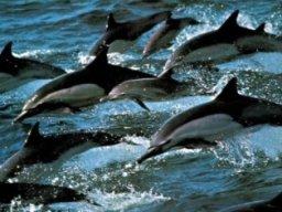 Delfinio