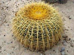 Jose Cactus