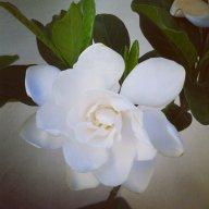 Flore90
