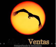 Adolfo Ventas