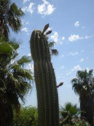 lovecactus