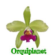 Orquiplanet