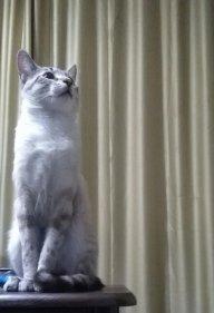 Kitty08
