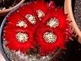 mp_cactus