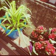 jardinera-novata