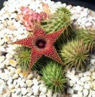 cactusmj