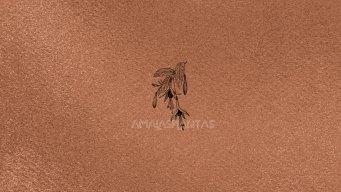 Amalasplantas