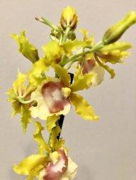 OrchidsBCN