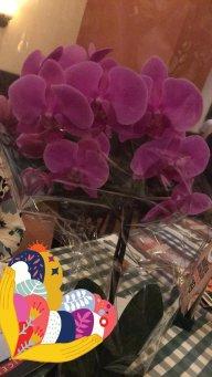 Orkiki