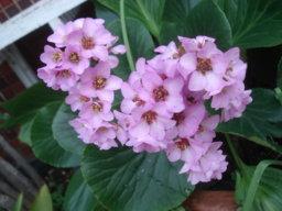 magnoliabcn