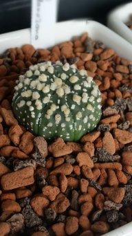 CactusNorth